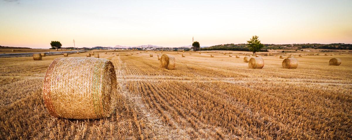 produzione cereali nel mondo